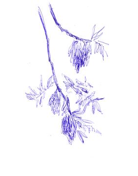 woellsteinerbaum