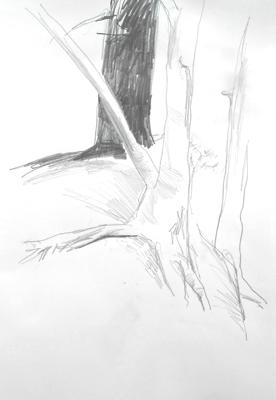sk_14-08-15wald-3