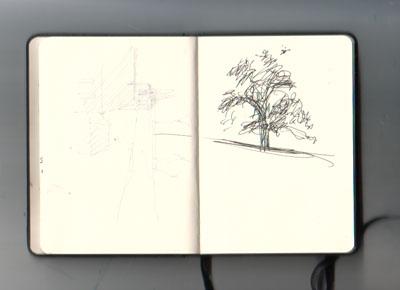 sk_09-10-15baum-netz