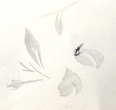 verneuil-insekt-tischtuch